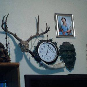 Steve the Mule Deer